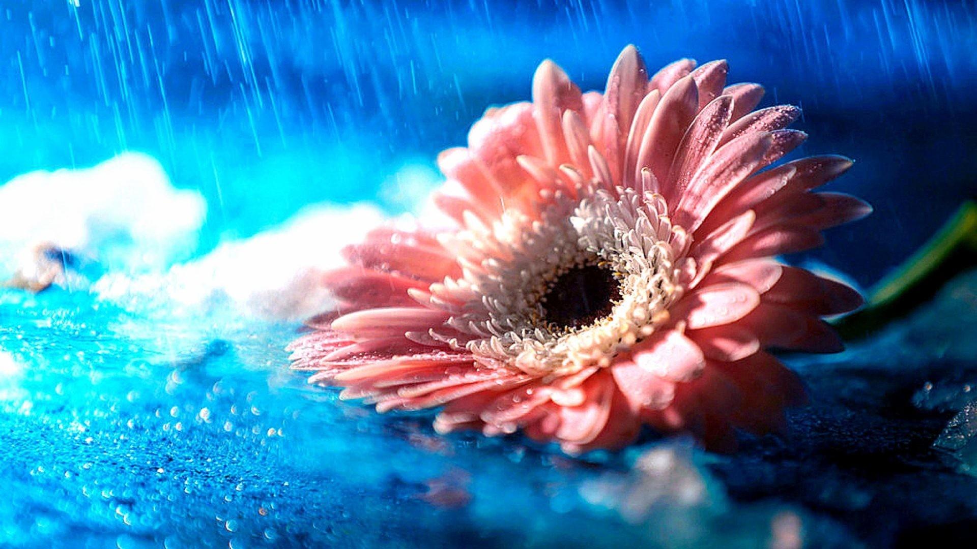 Arrangements Tag – Season Colors Four Arrangements Pre Flower Pretty Rain  Rainy Flowers Attractions Lovely Dreams