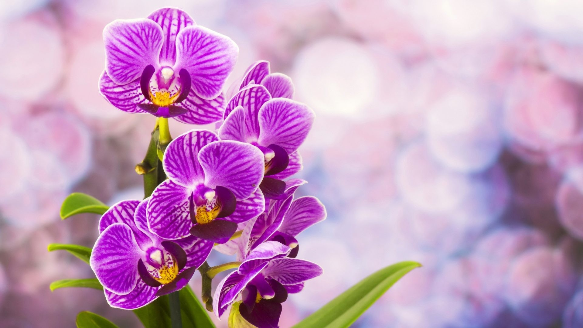 #882288 Color – Lovely Beautiful Pretty Purple Flowers Orchids Desktop  Wallpaper Flower Garden for HD