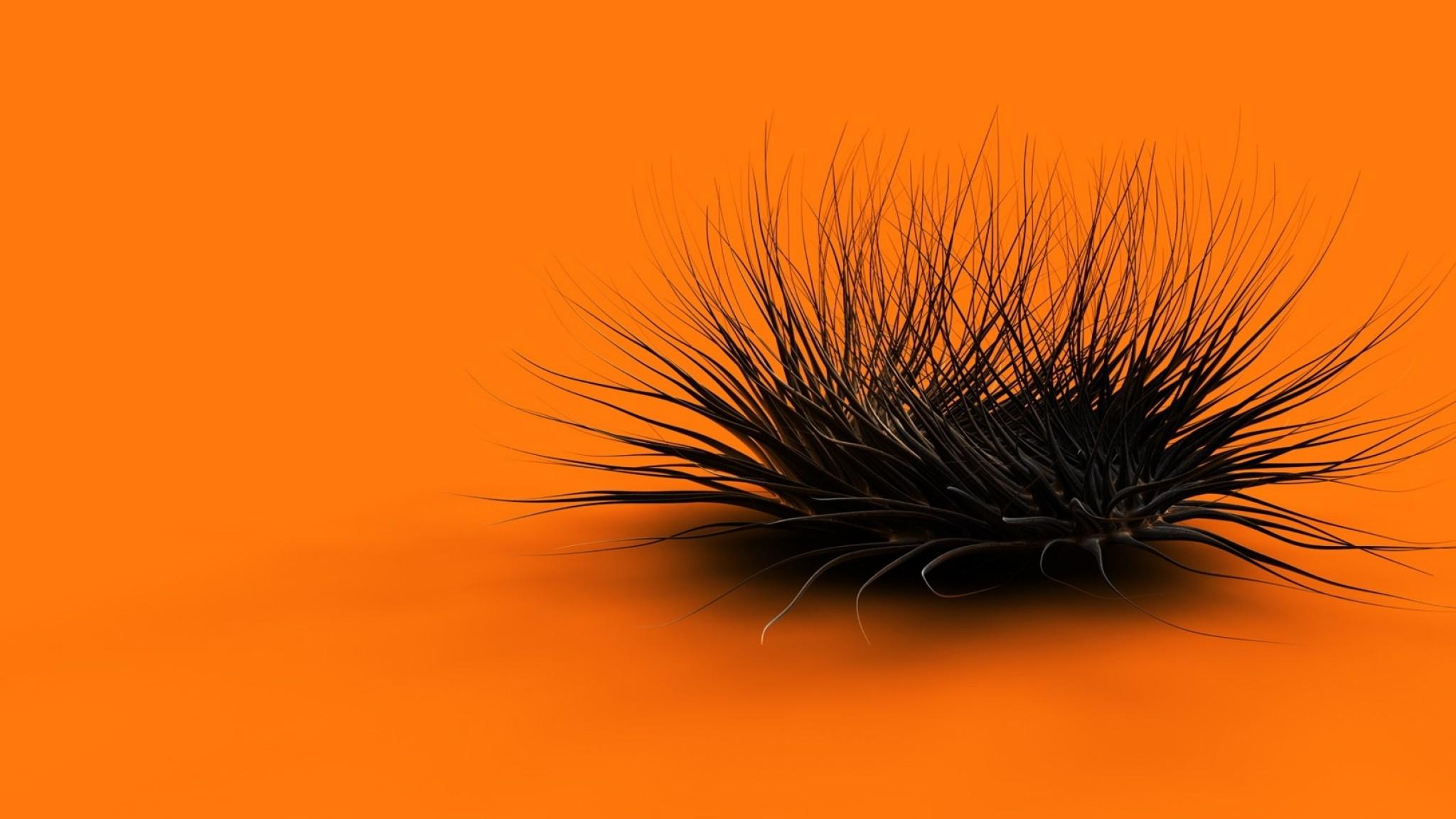 Preview wallpaper orange, black, feathers, form 2048×1152