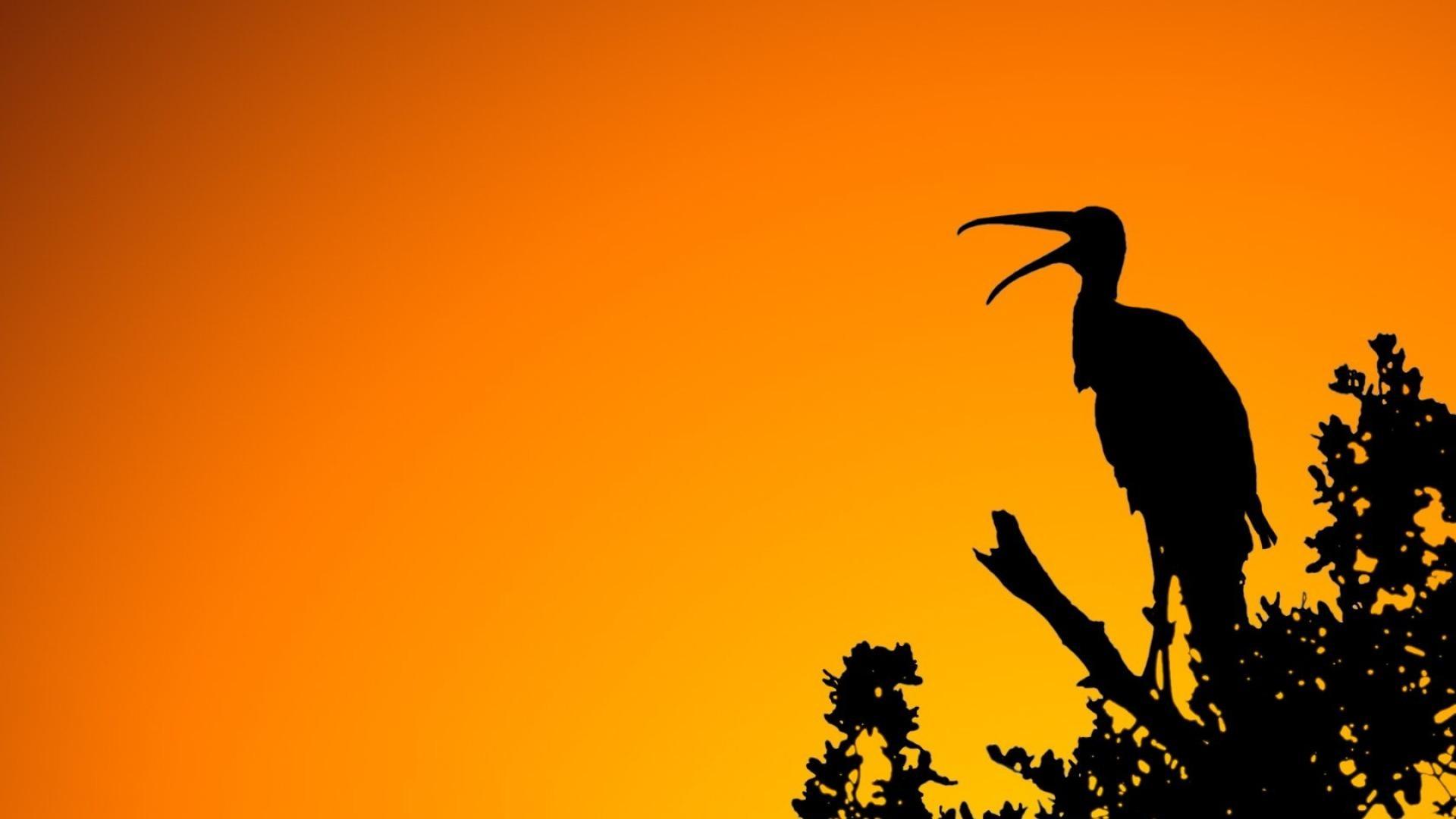 black and orange abstract shadow birds widescreen hd wallpaper . …