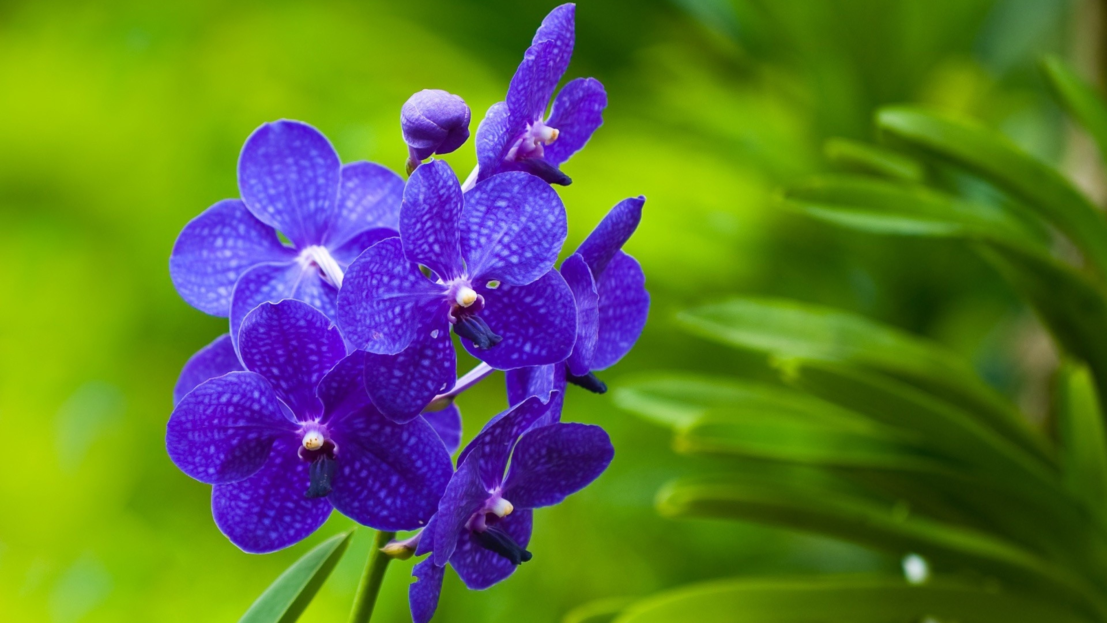 Preview wallpaper flowers, purple, bright, twigs, grass 3840×2160