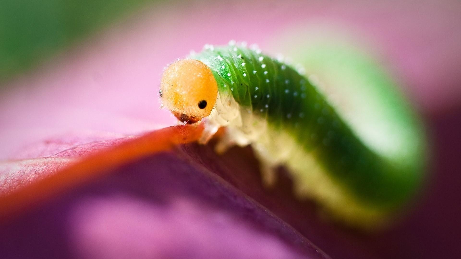 Wallpaper caterpillar, green, purple, insect