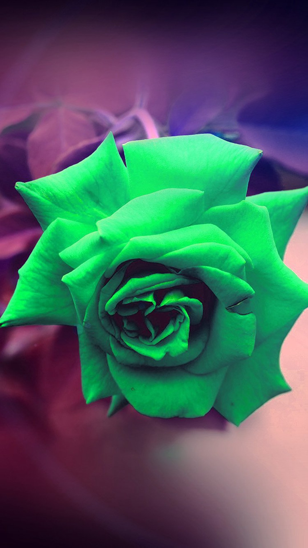 Green Rose Nature Flower Wood Love Valentine Flare #iPhone #6 #plus # wallpaper