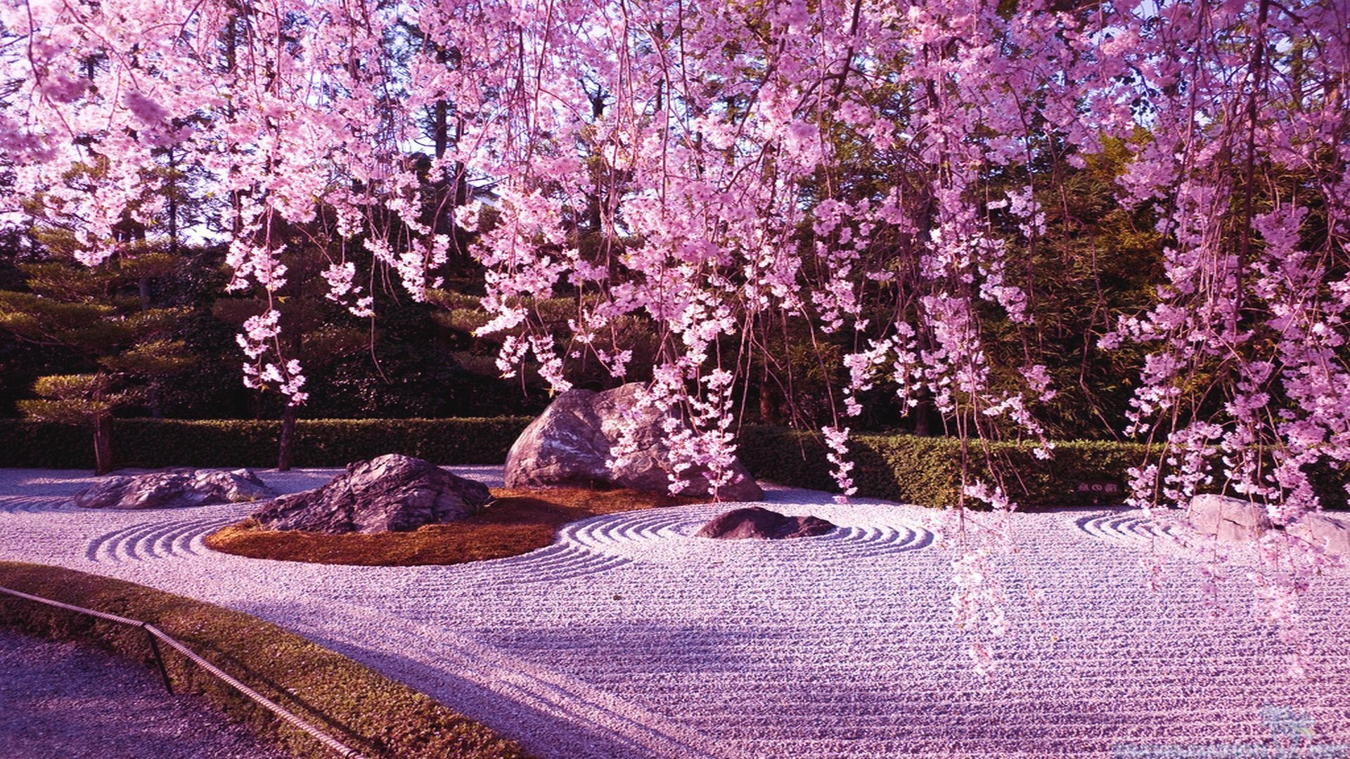 Beautiful Cherry Blossom Wallpapers in High Resolution