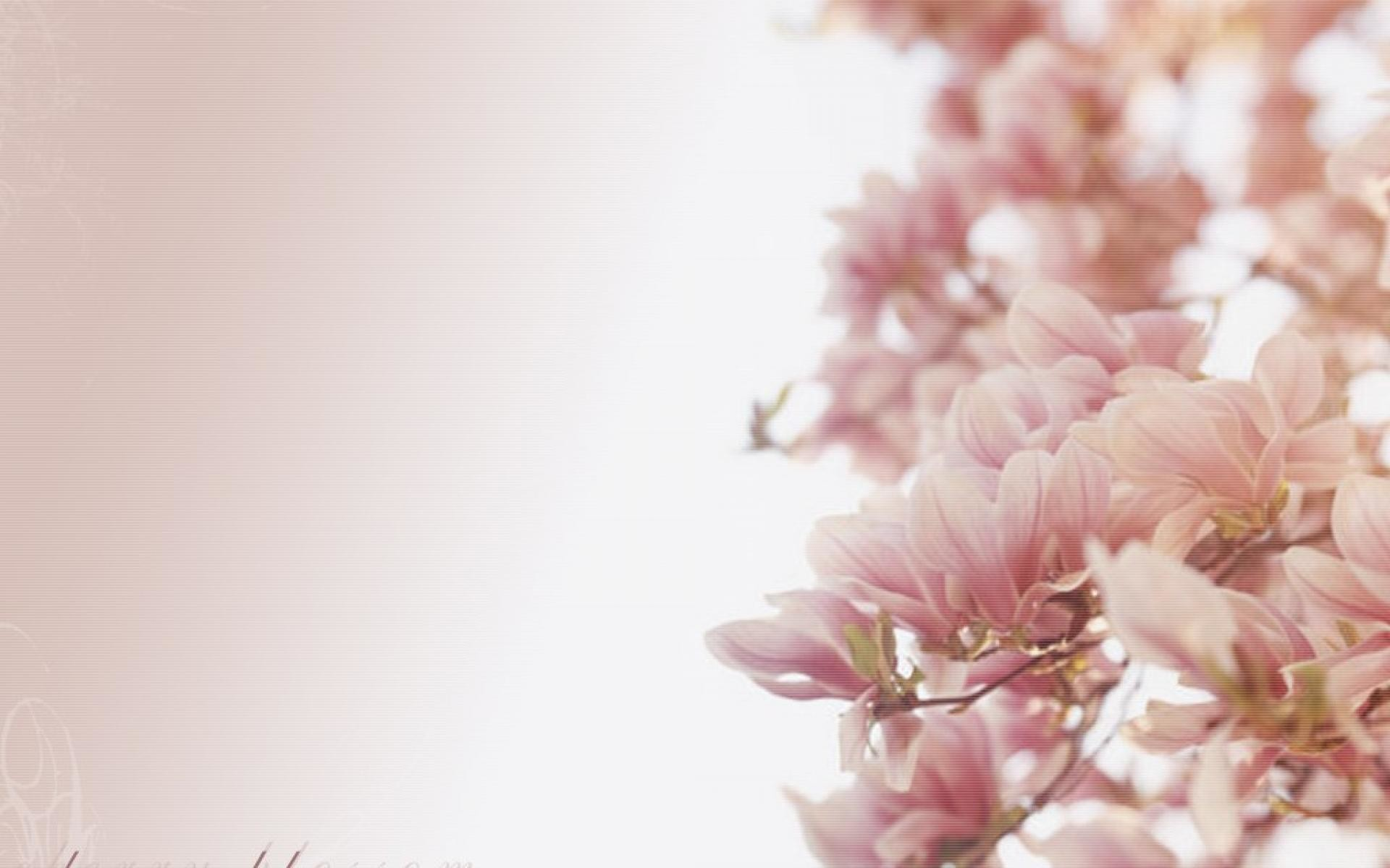 Hd-cherry-blossom-1080p-wallpapers-white.jpg (1920×