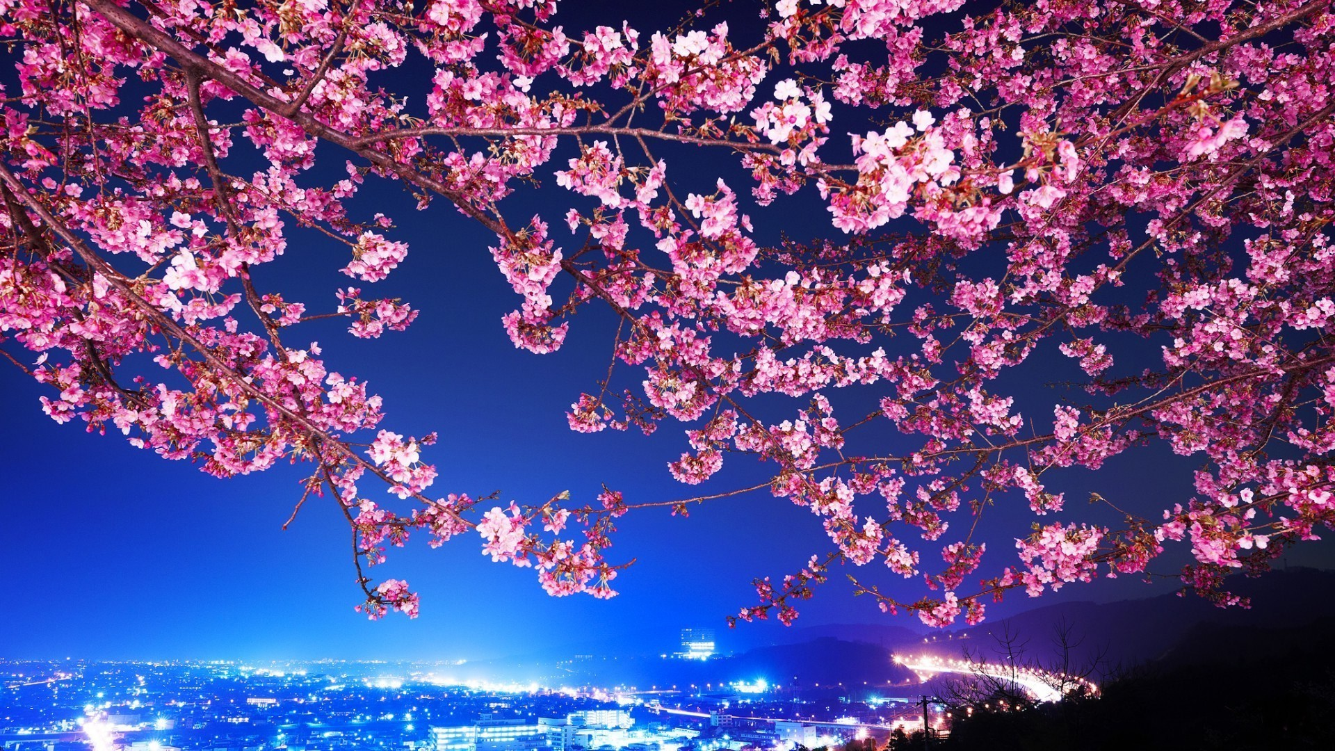 flowers, Cityscape, Tokyo, Cherry Blossom Wallpapers HD / Desktop and  Mobile Backgrounds