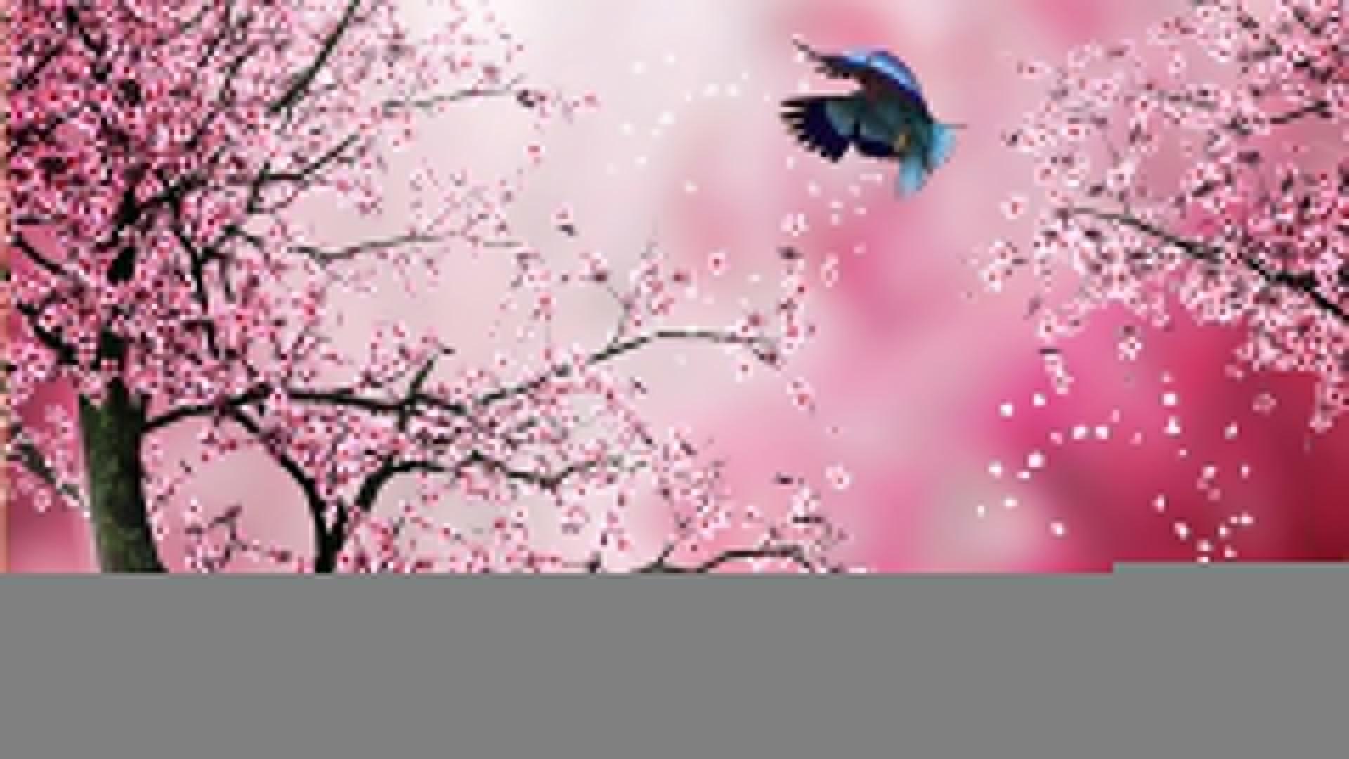 11673) Cherry Blossom Tree Desktop HD Wallpaper – WalOps.com