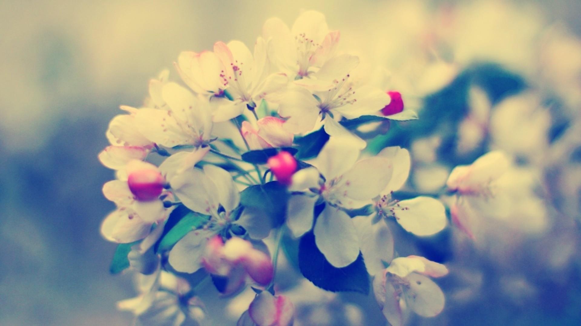 Preview wallpaper blossom, branch, flower, glare 1920×1080