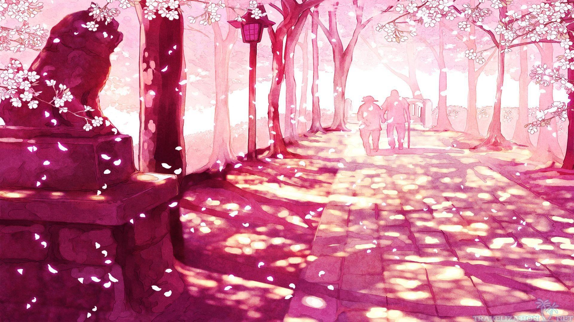 Sakura Cherry Blossom HD desktop wallpaper High Definition