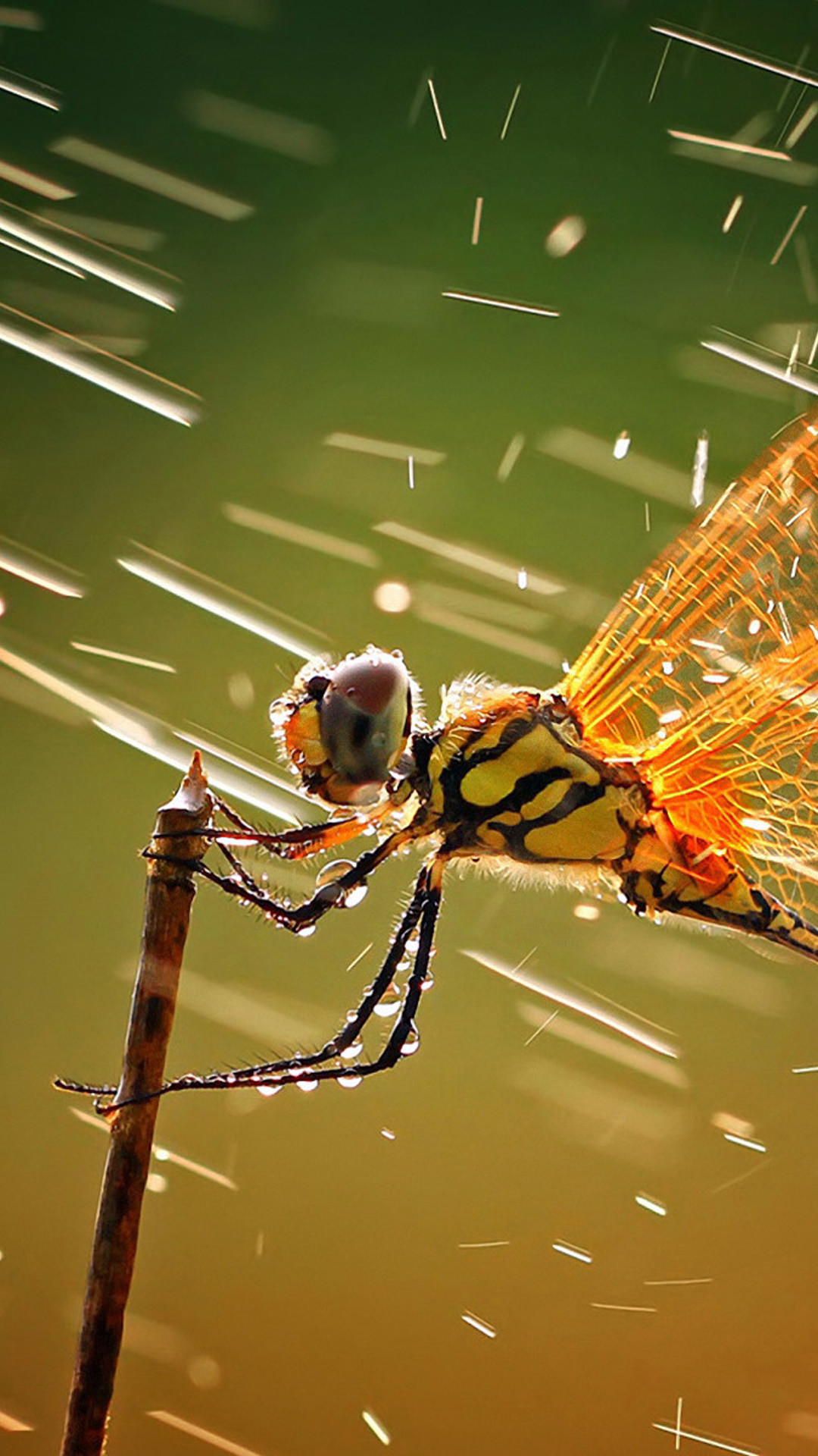 insect arthropod black and gold garden plant fly drops animal nature