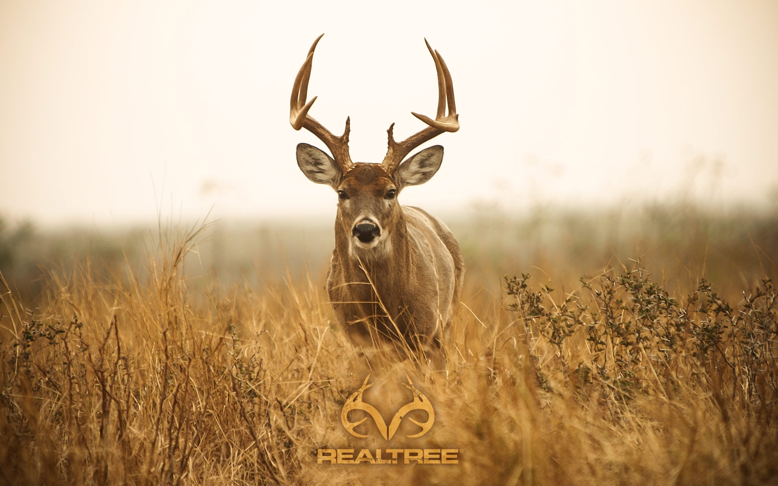 best-realtree-images-download-wallpaper-wp4002617