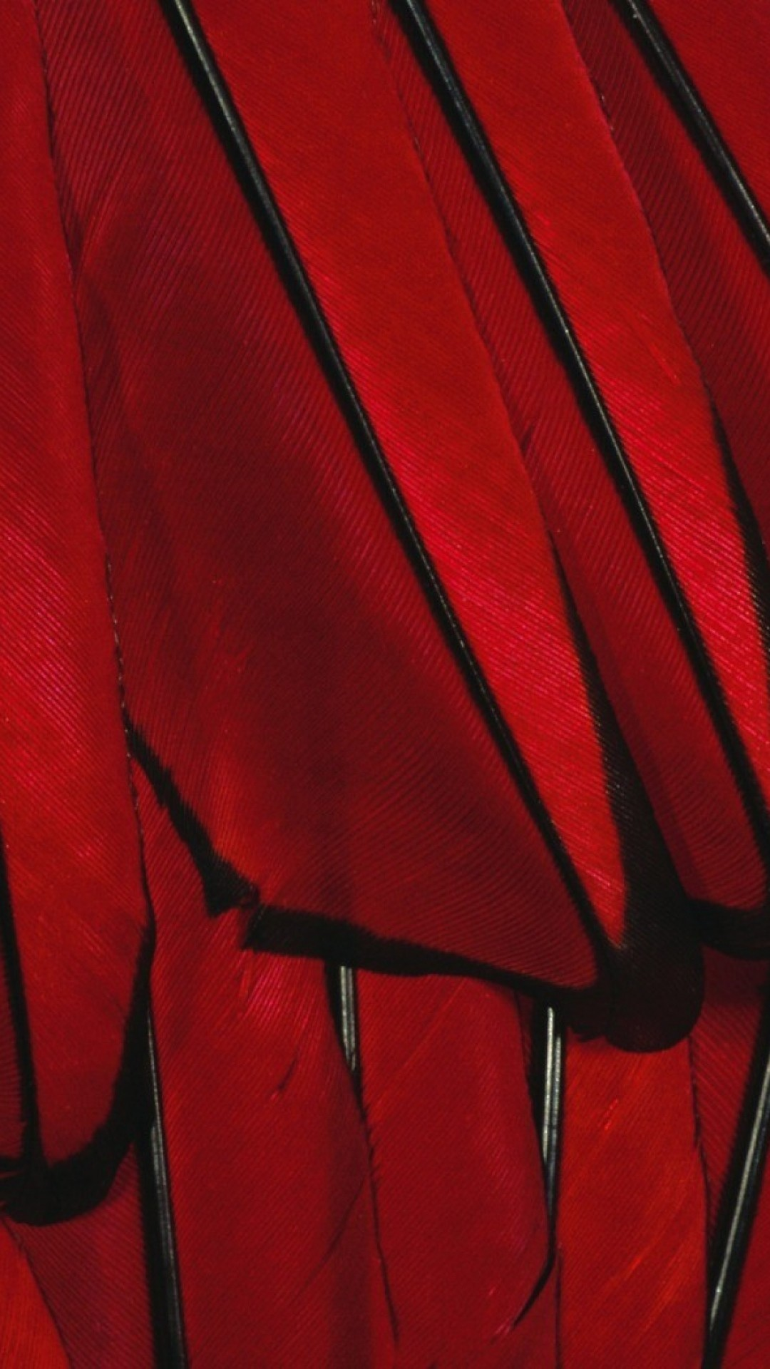 Black Red Paint Color Feather iPhone 6 wallpaper
