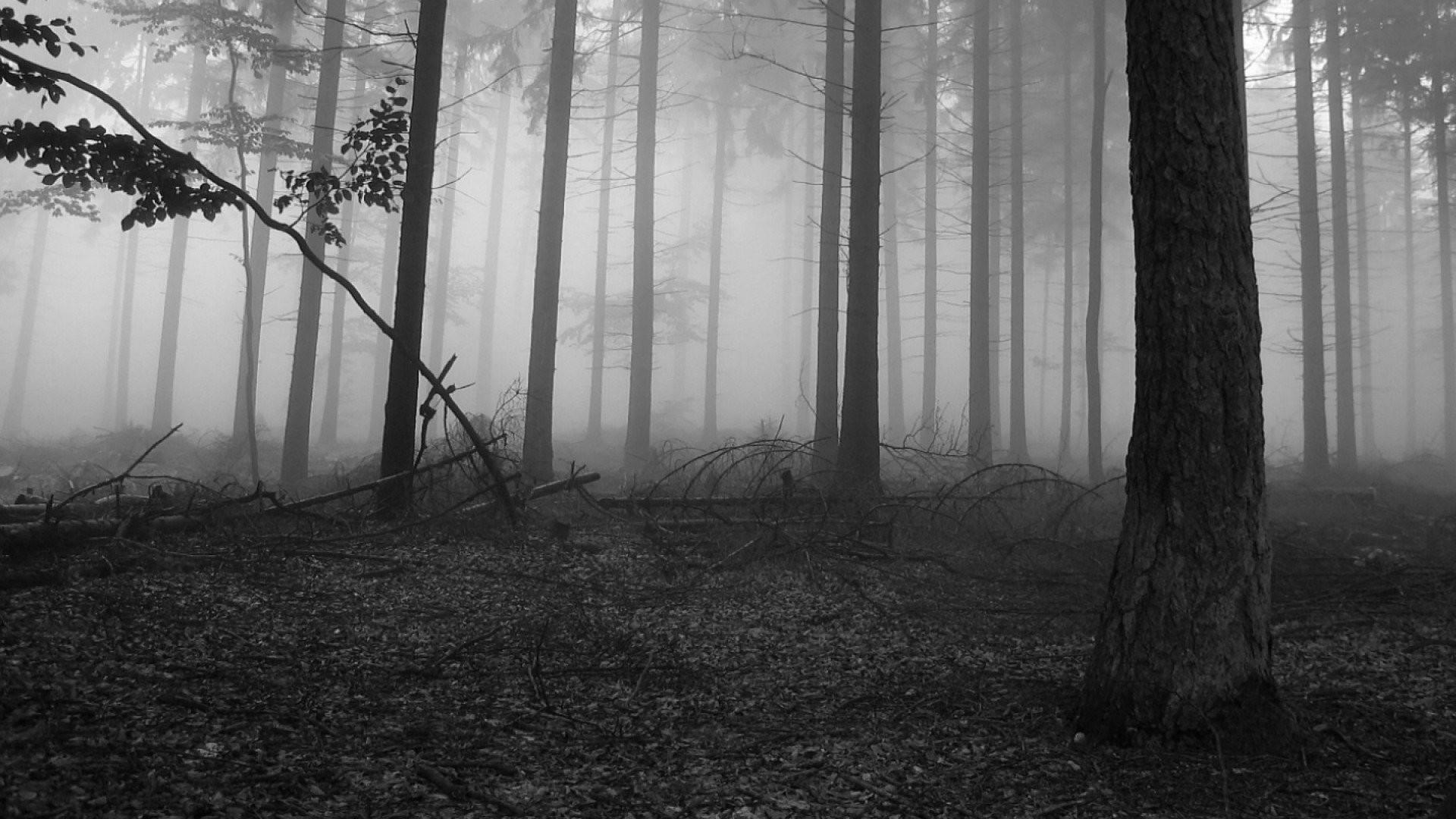 Black And White Nature 916260