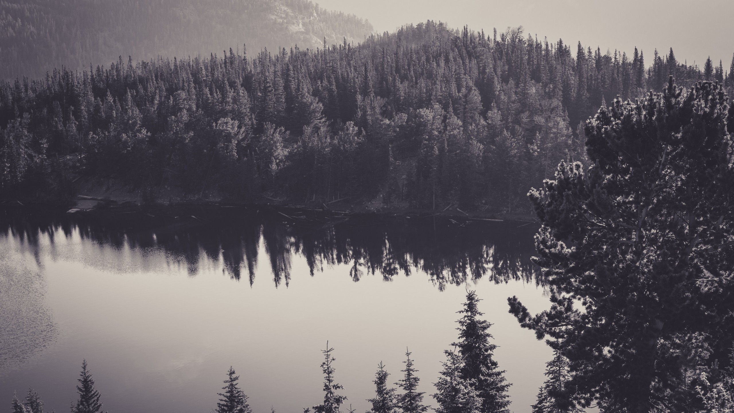 wallpaper.wiki-Black-and-White-Forest-2560×1440-High-