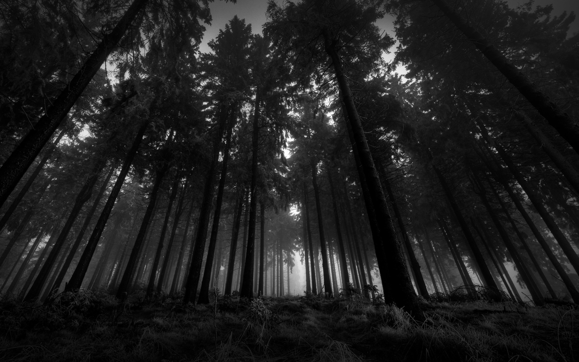 Black And White Landscapes Nature Trees