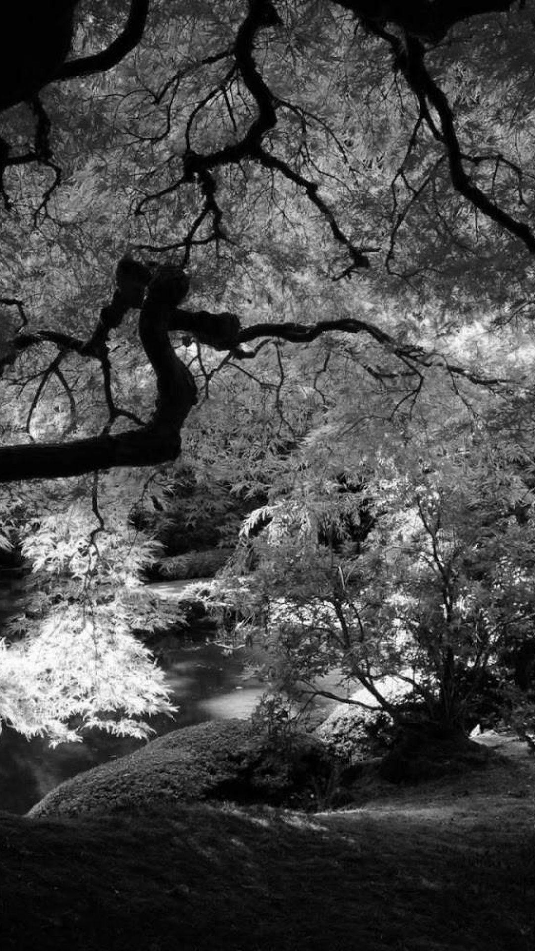 Black And White Nature Wallpaper