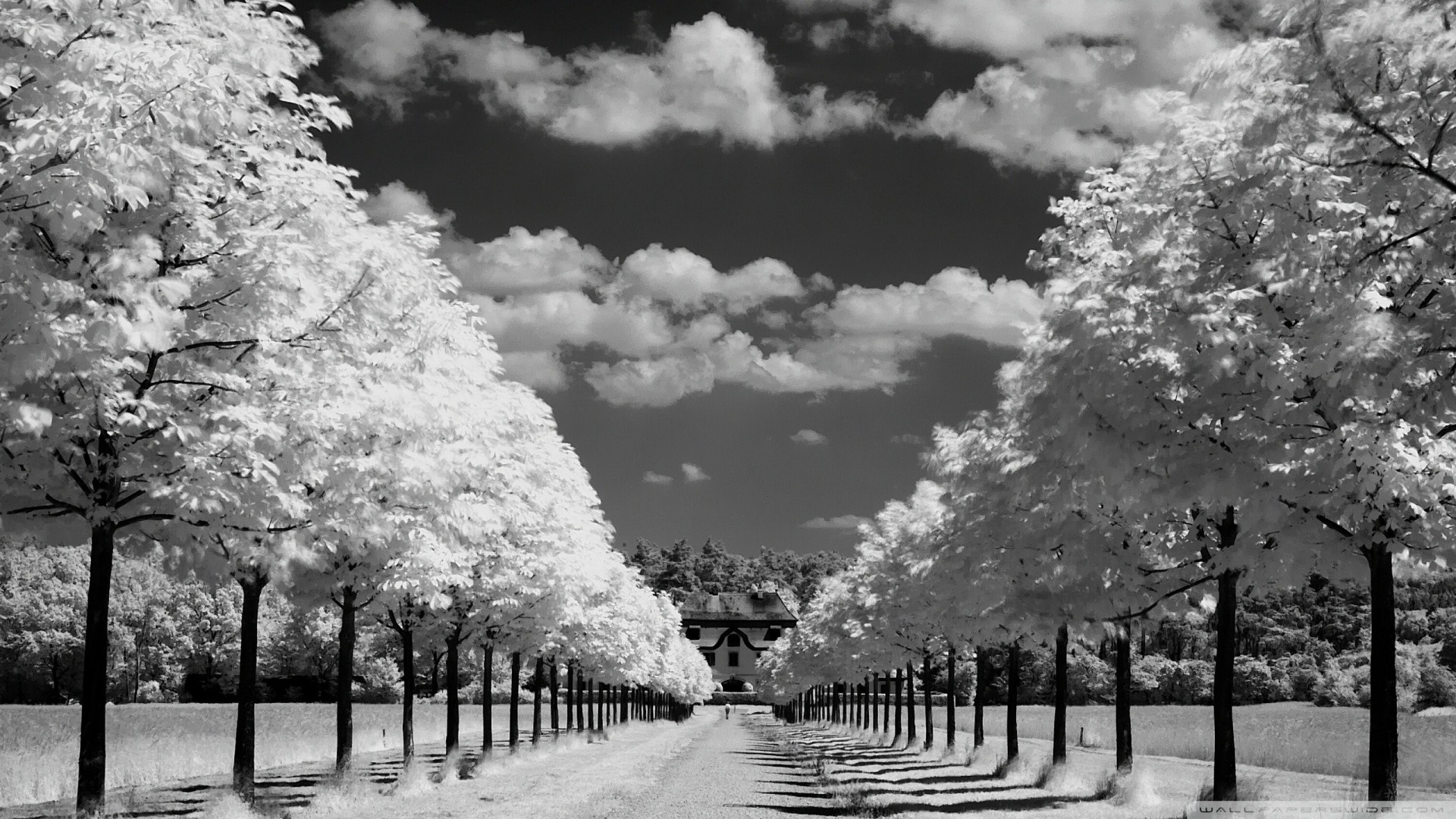 Best Wallpaper Photography Black And White: black and white tree