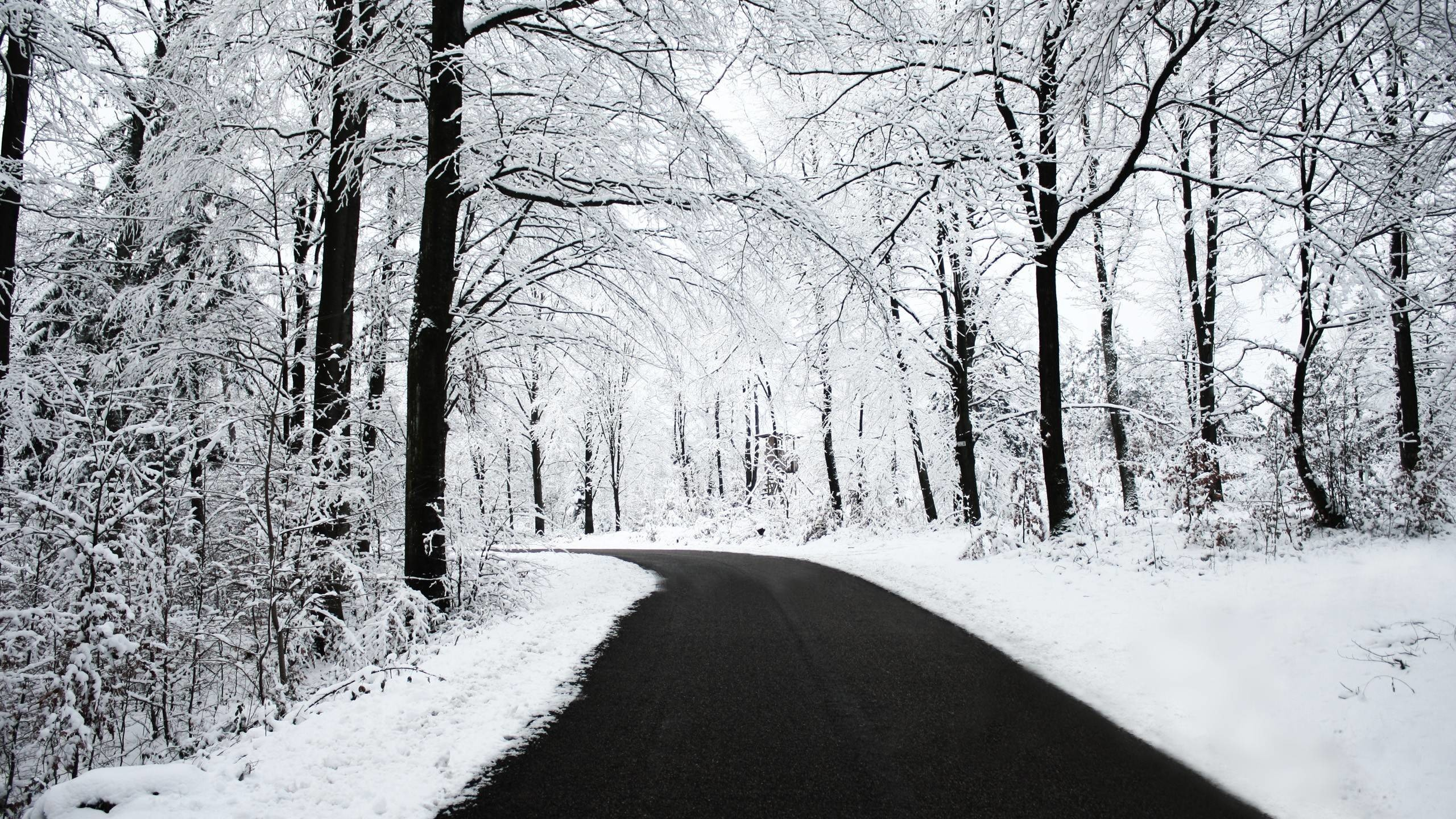Snowy Forest Picture Wallpaper – HD Wallpapers