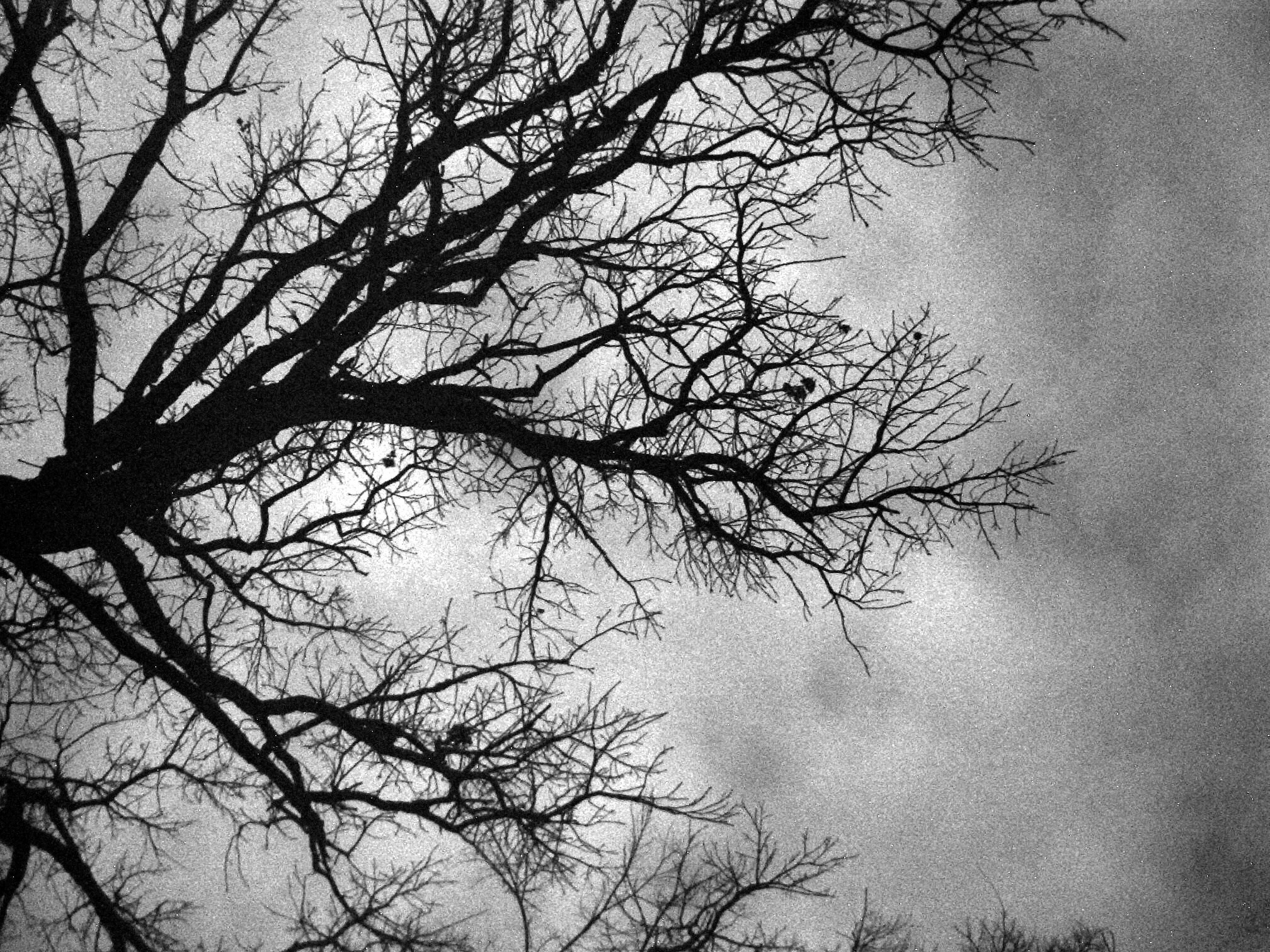 Black And White Images Of Trees 28 Free Hd Wallpaper .