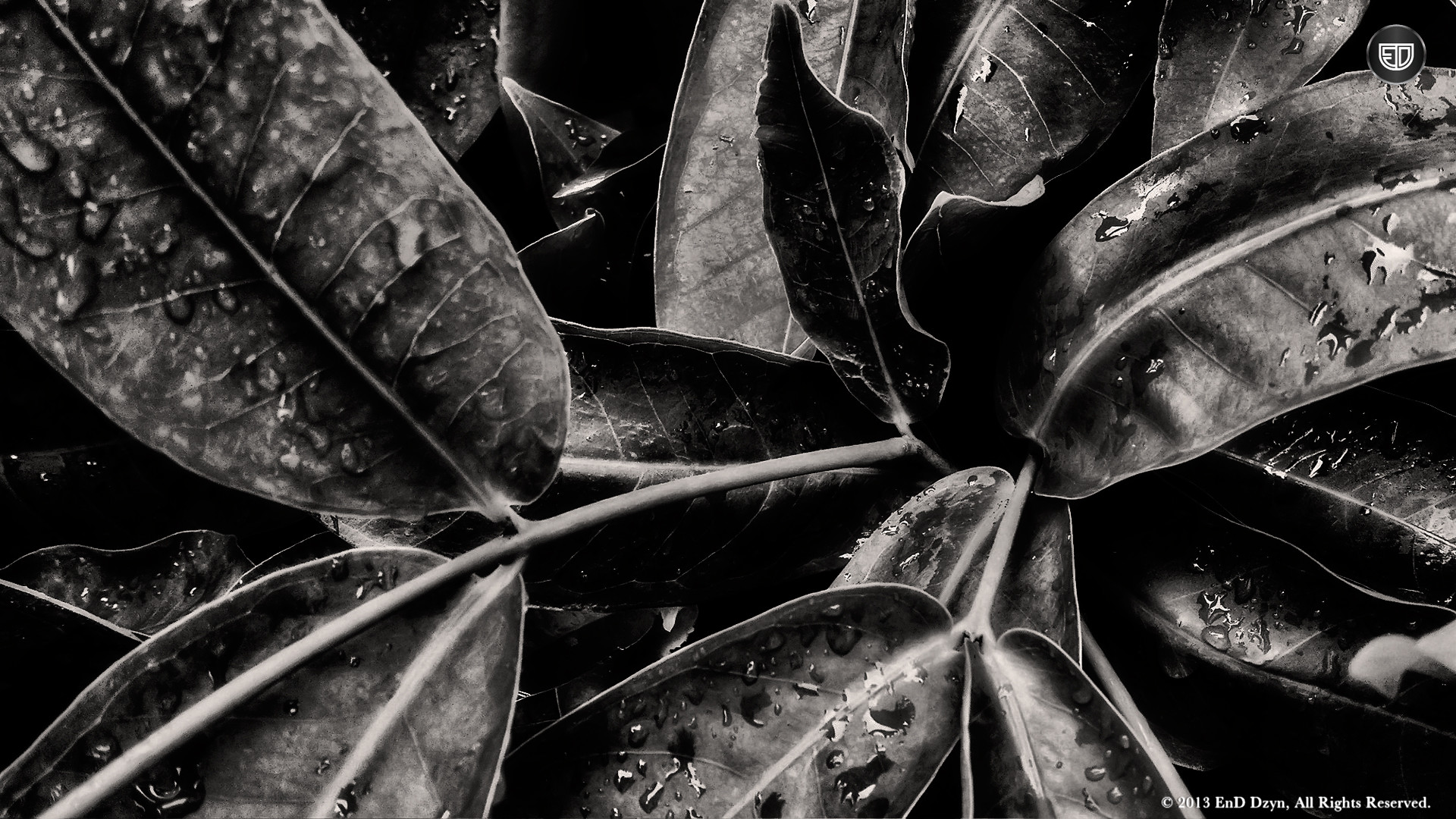 Cool Black And White Wallpapers Resolution 1920×1080-Desktop Backgrounds-57