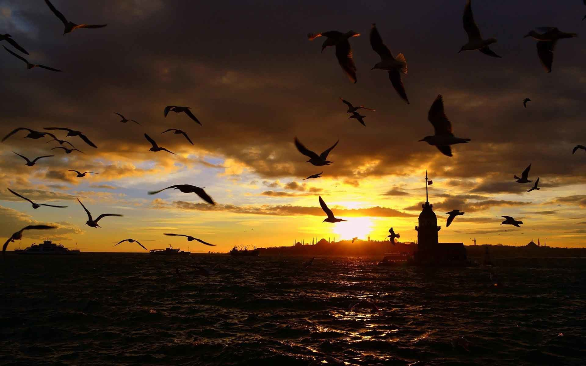 Landscapes Istanbul Sea Night Turkey Birds Flying Black And White Nature  Iphone Wallpaper