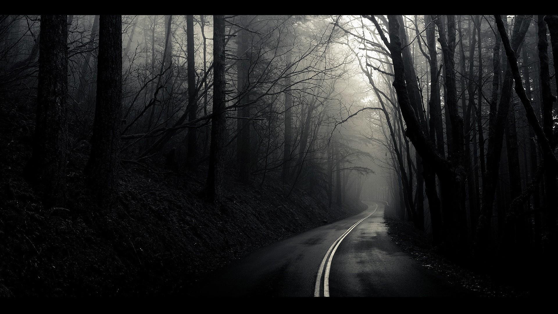 Monochrome Tag – Roads Monochrome Path Landscapes Mist Fog White Black  Trees Beautiful Nature Hd Desktop