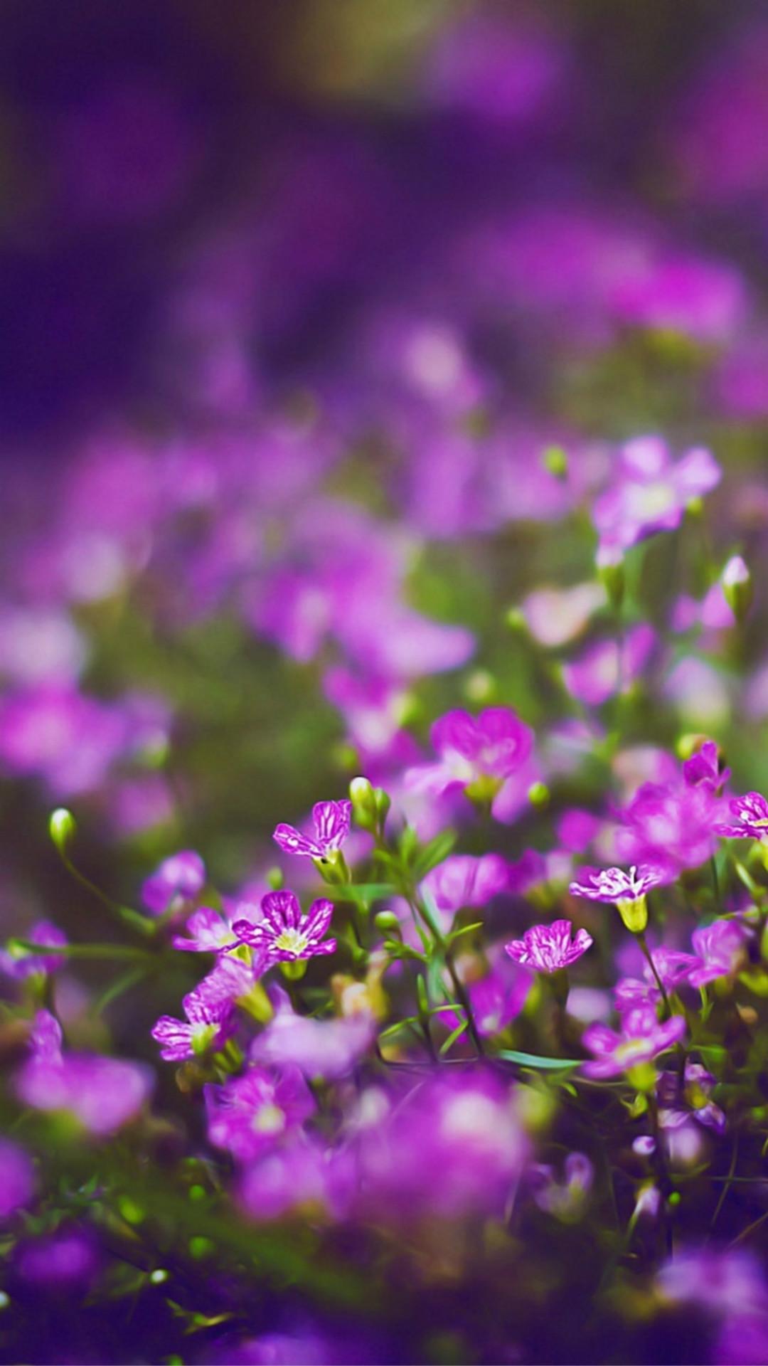Beautiful Purple Flower Field Blur Bokeh #iPhone #6 #wallpaper