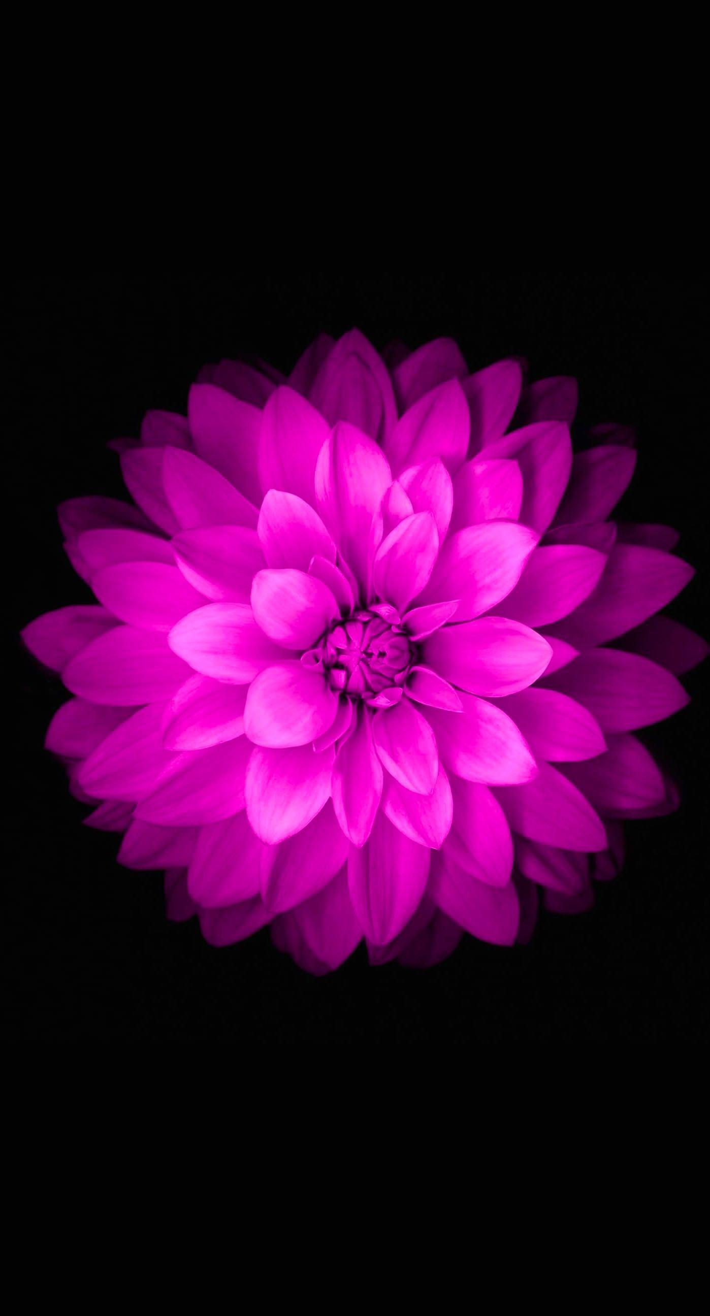 Purple Flower Wallpaper for iPhone – WallpaperSafari