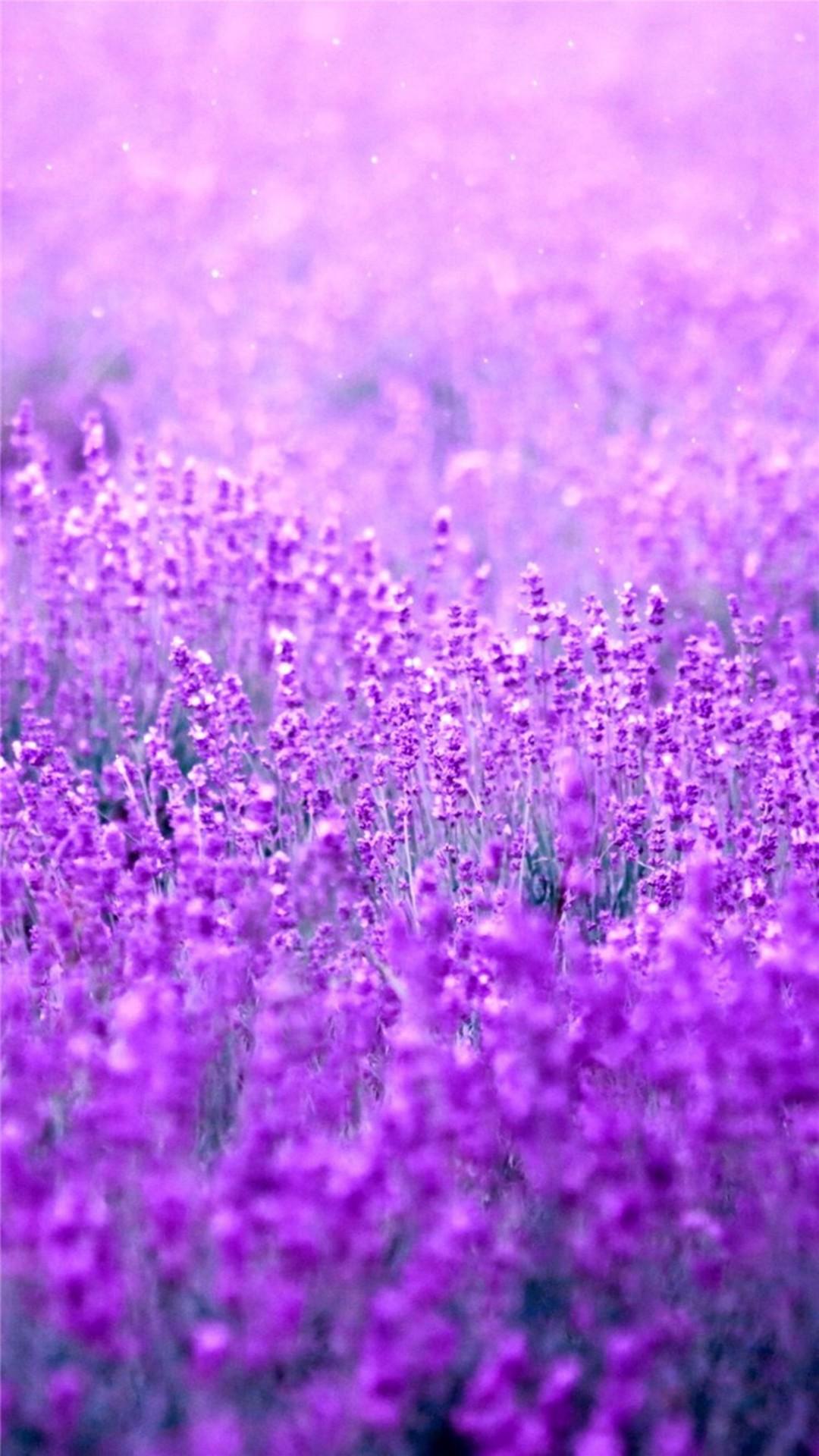 Pure Dreamy Flowers Garden Field Blur #iPhone #6 #plus #wallpaper