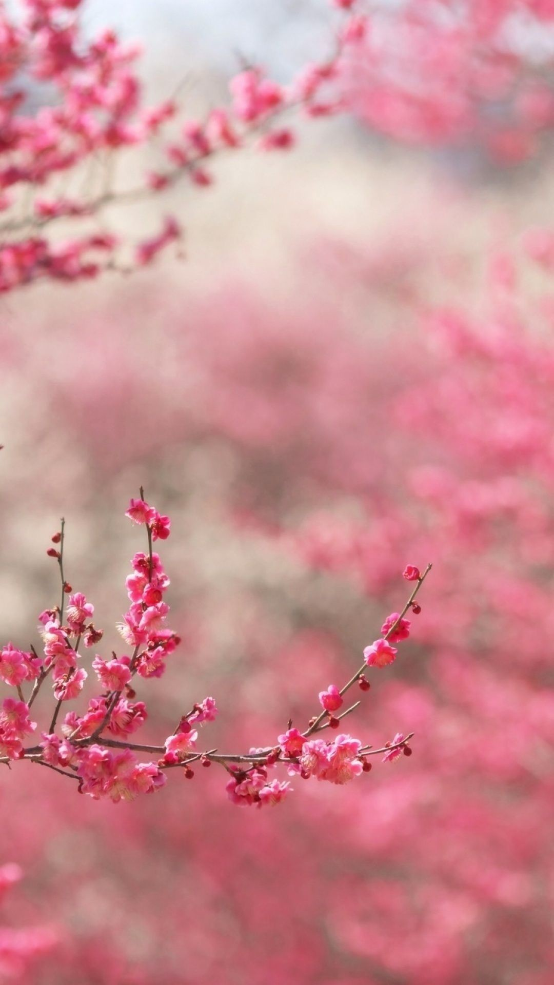 … Pink Iphone Plus Wallpaper Girly. Download