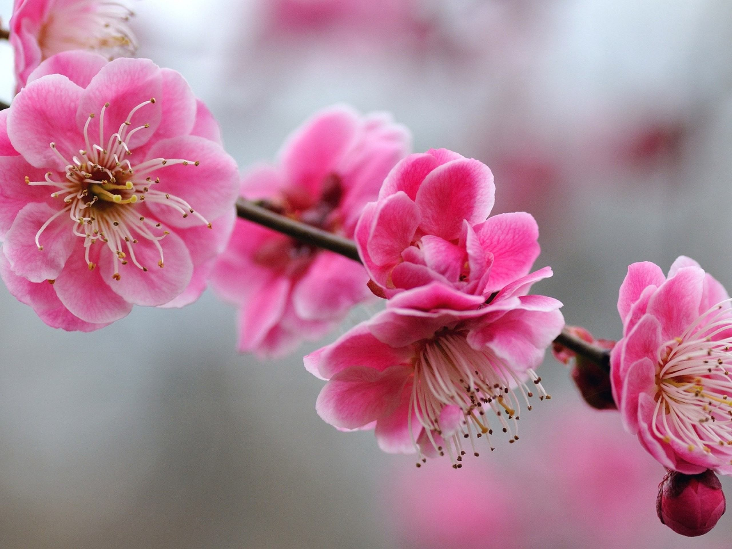 pink-flowers-cute-girly-wallpapers