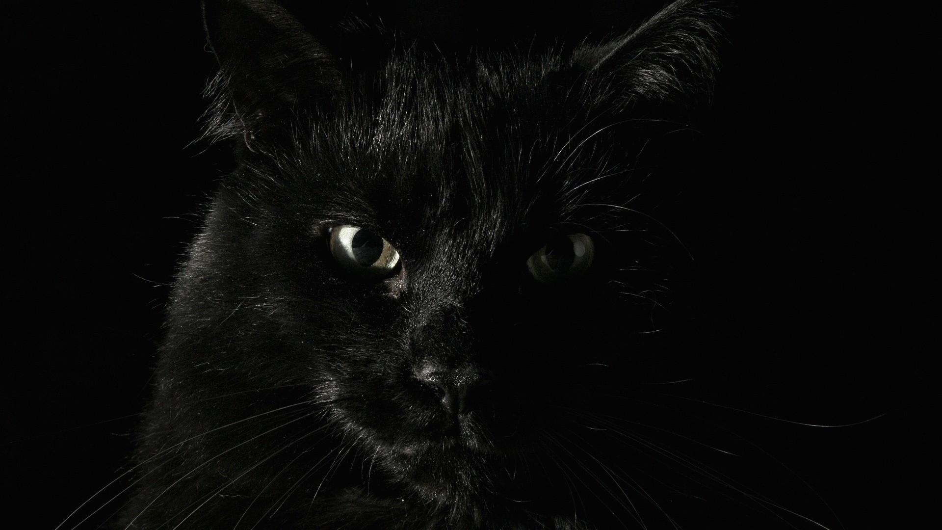 Wallpaper black, fear, female, face, eyes