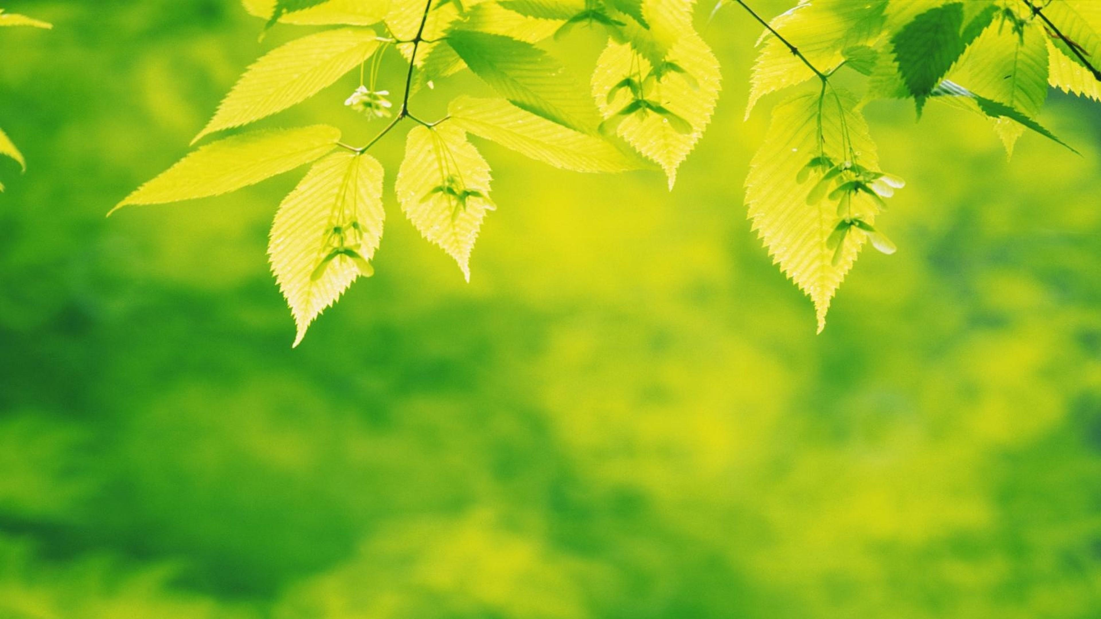 Wallpaper leaves, carved, light, green