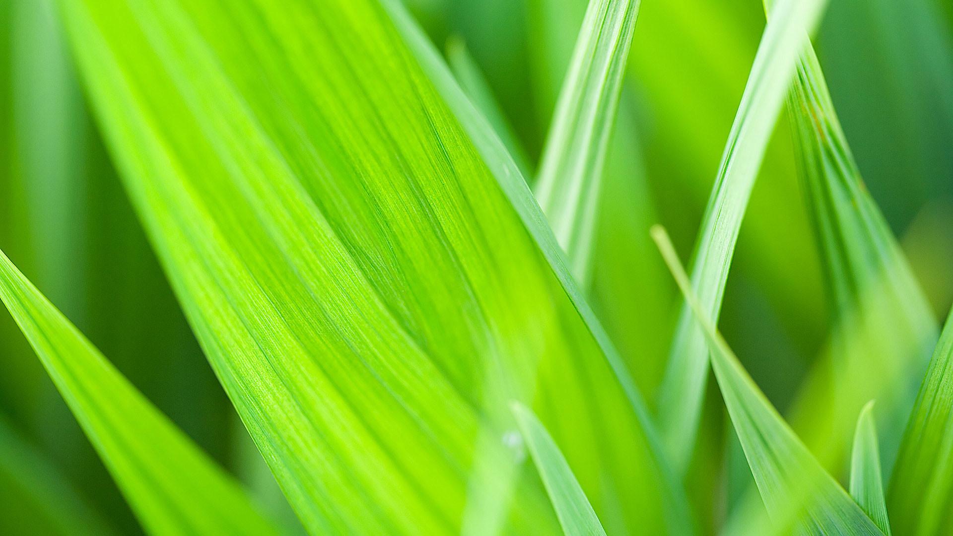 hd pics photos green leaves light green nature desktop background wallpaper