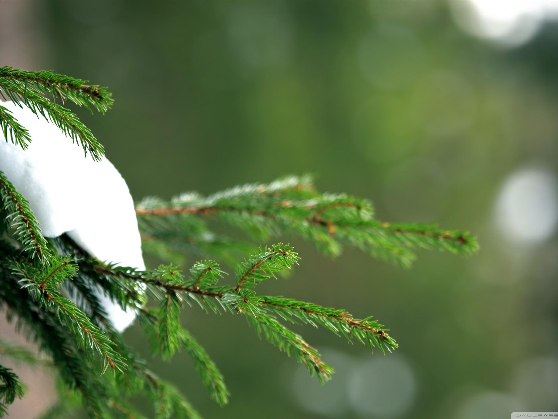 green forest-desktop wallpaper winter scenery – .