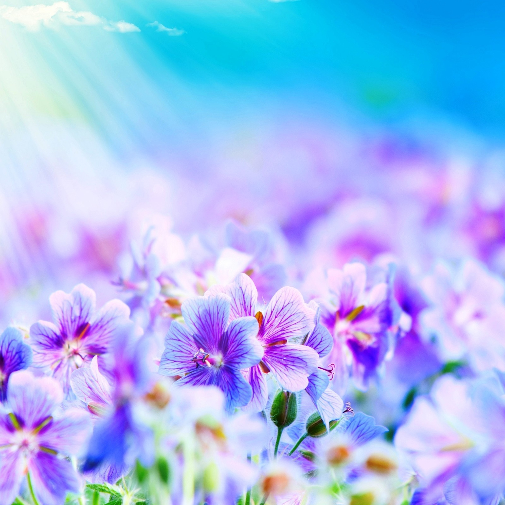 Pix For > Light Purple Flowers Wallpaper