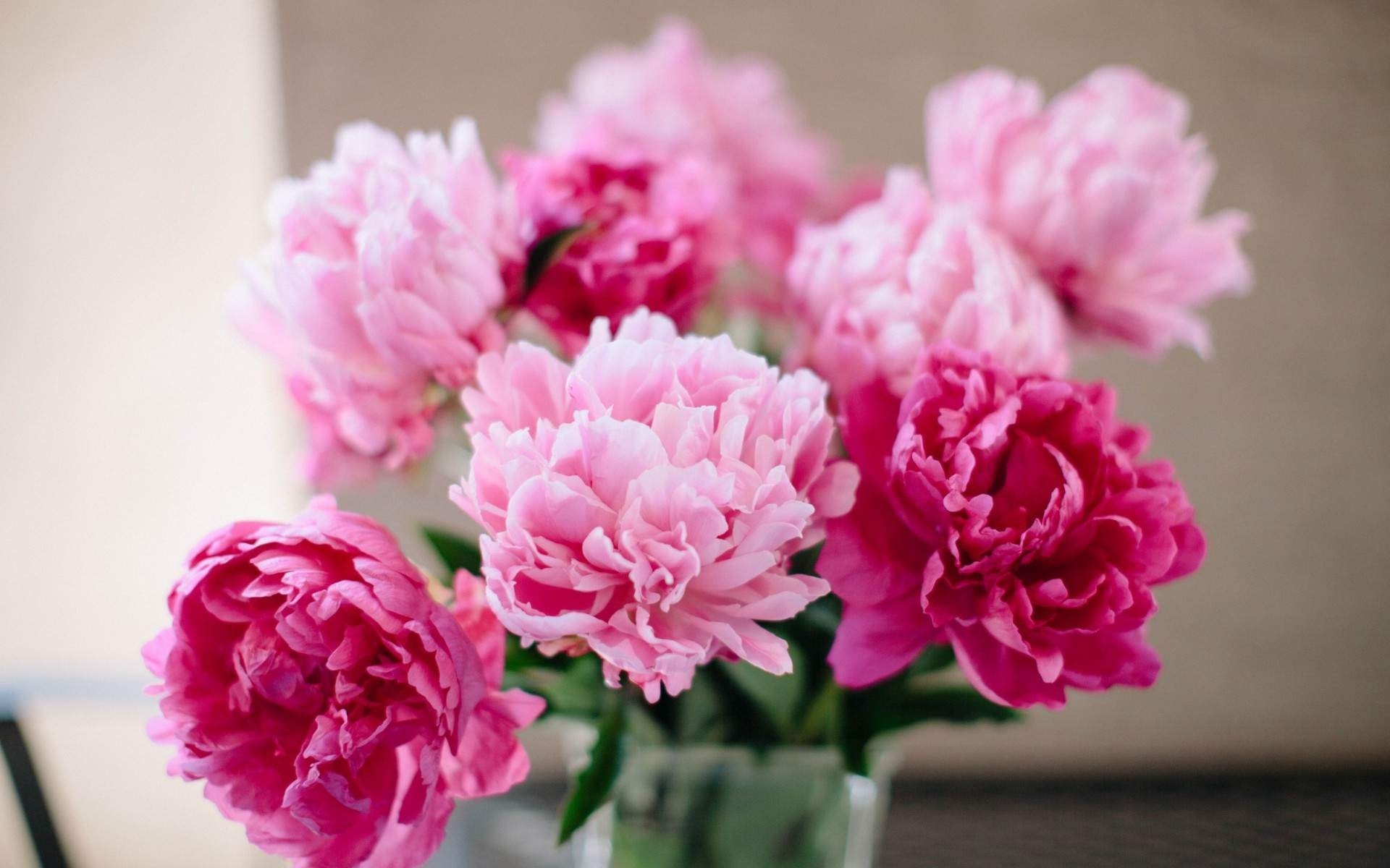 Pink and light purple flowers HD wallpapers