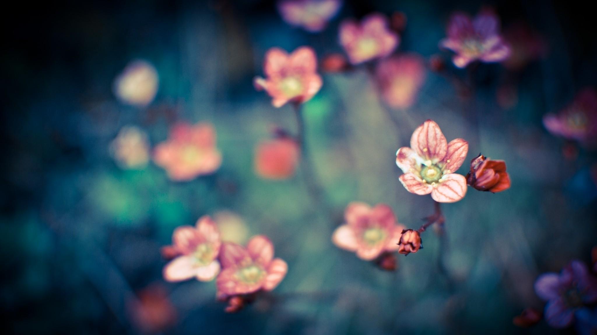 Wallpaper color, background, blur, small, dark