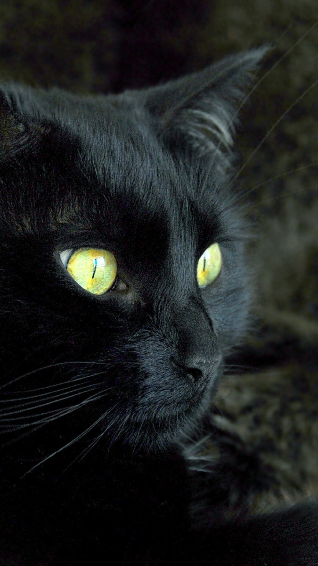 Wallpaper cat, face, eyes, dark, color