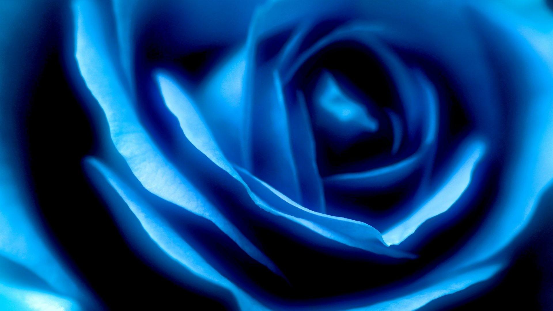Swirls Tag – Flower Swirls Swirl Blue Rose Wallpaper Flowers for HD 16:9  High