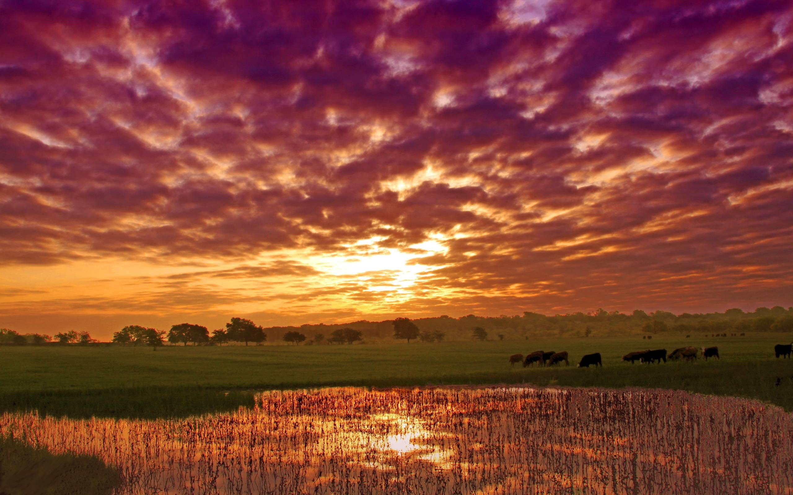 Free Clouds of Purple and Orange Wallpapers, Free Clouds of Purple .