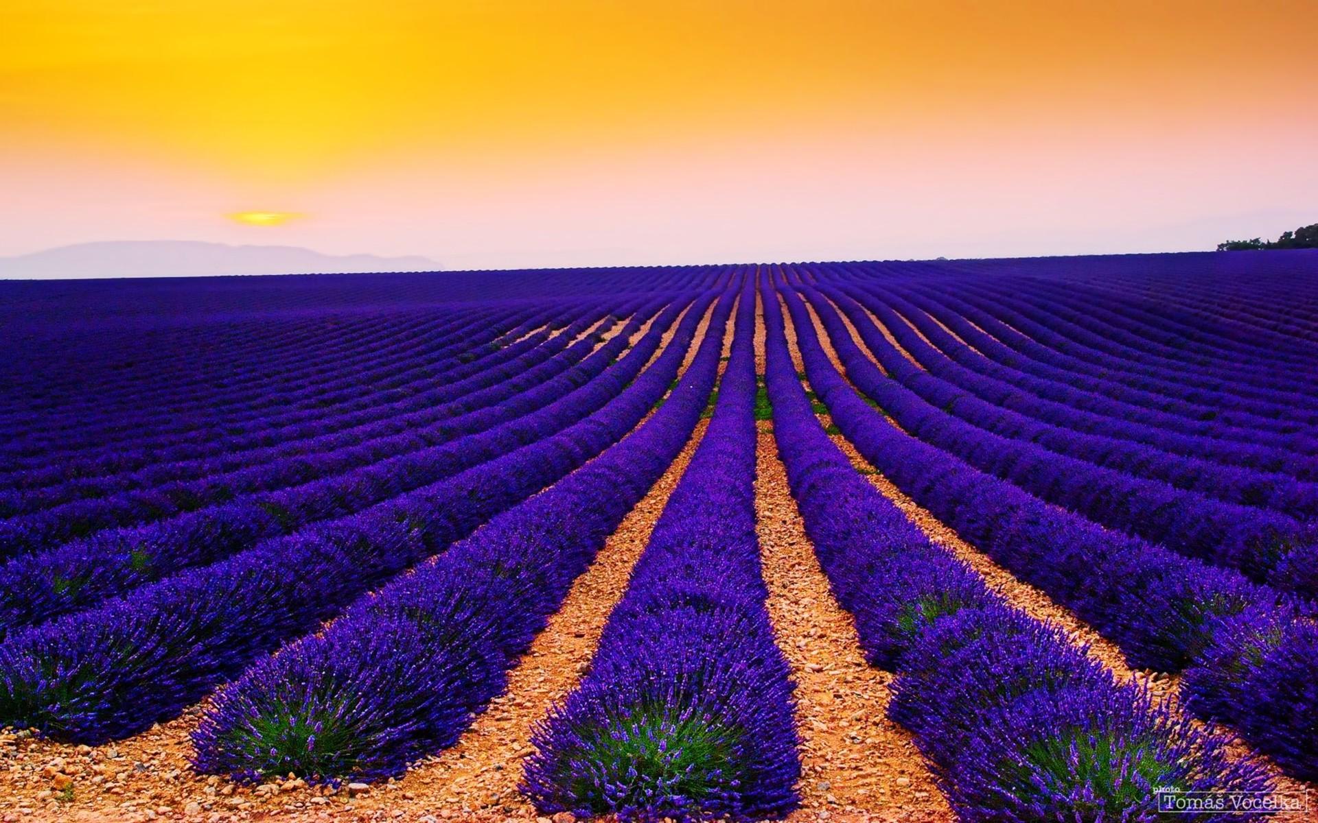 Purple Lavender & Orange Sky wallpapers and stock photos