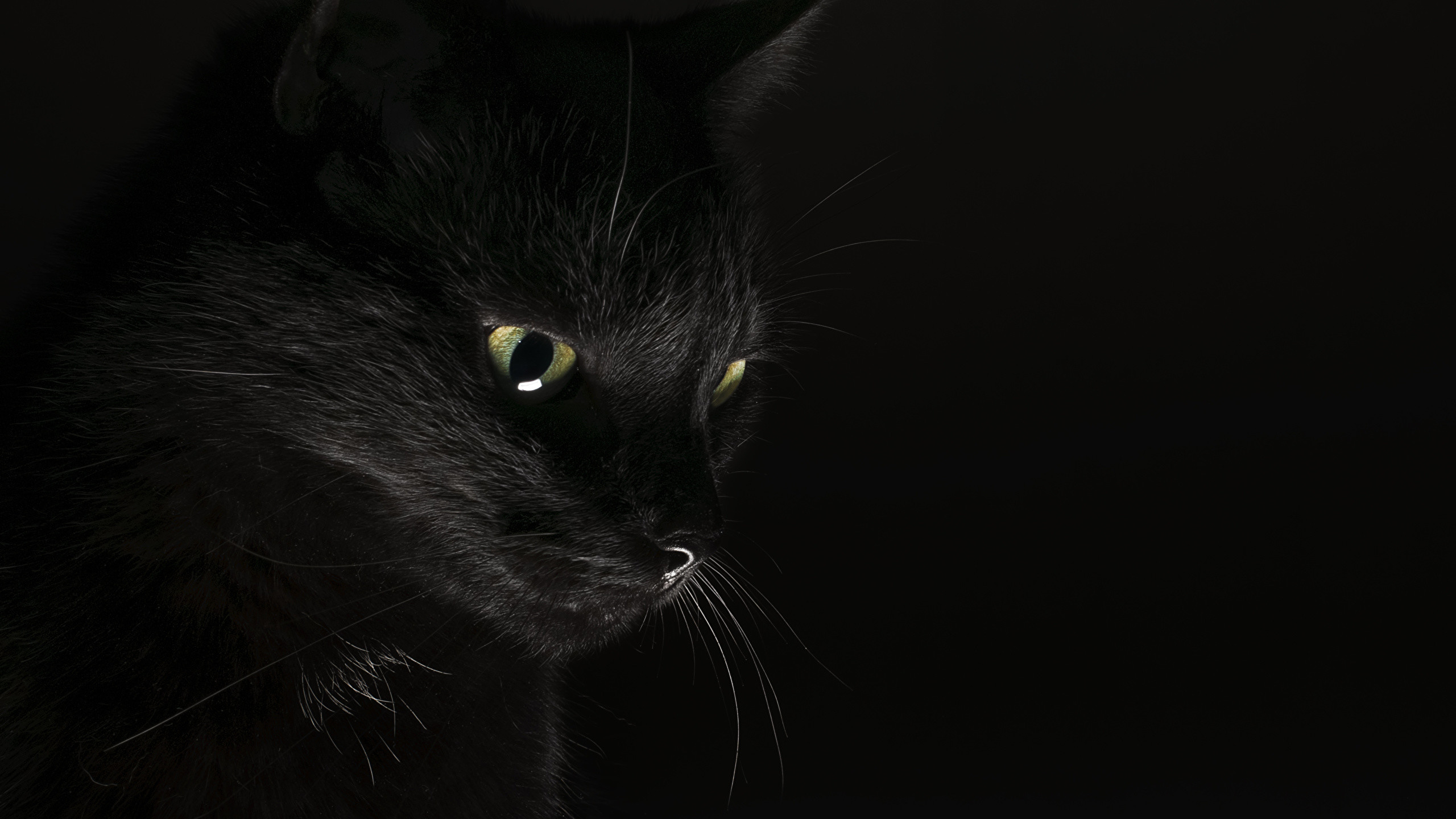 Picture Cats Black Animals Black background 2560×1440