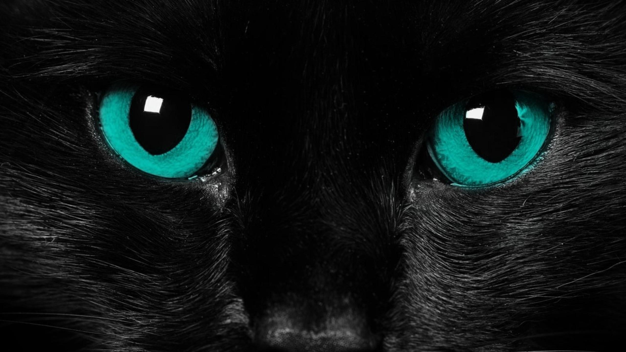 Wallpaper eyes, black cat, close-up