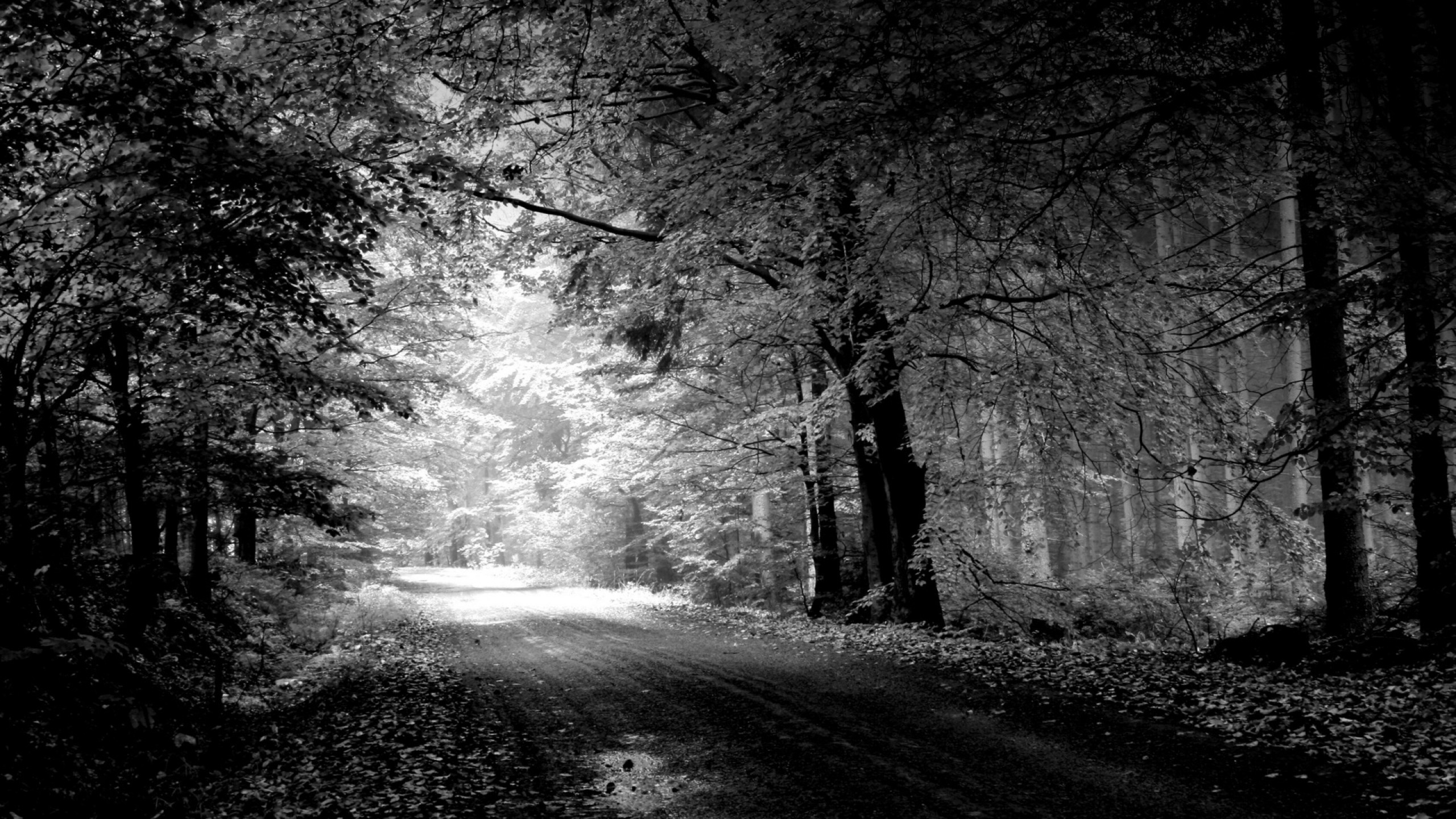 Wallpaper road, autumn, black-and-white, trees, pool