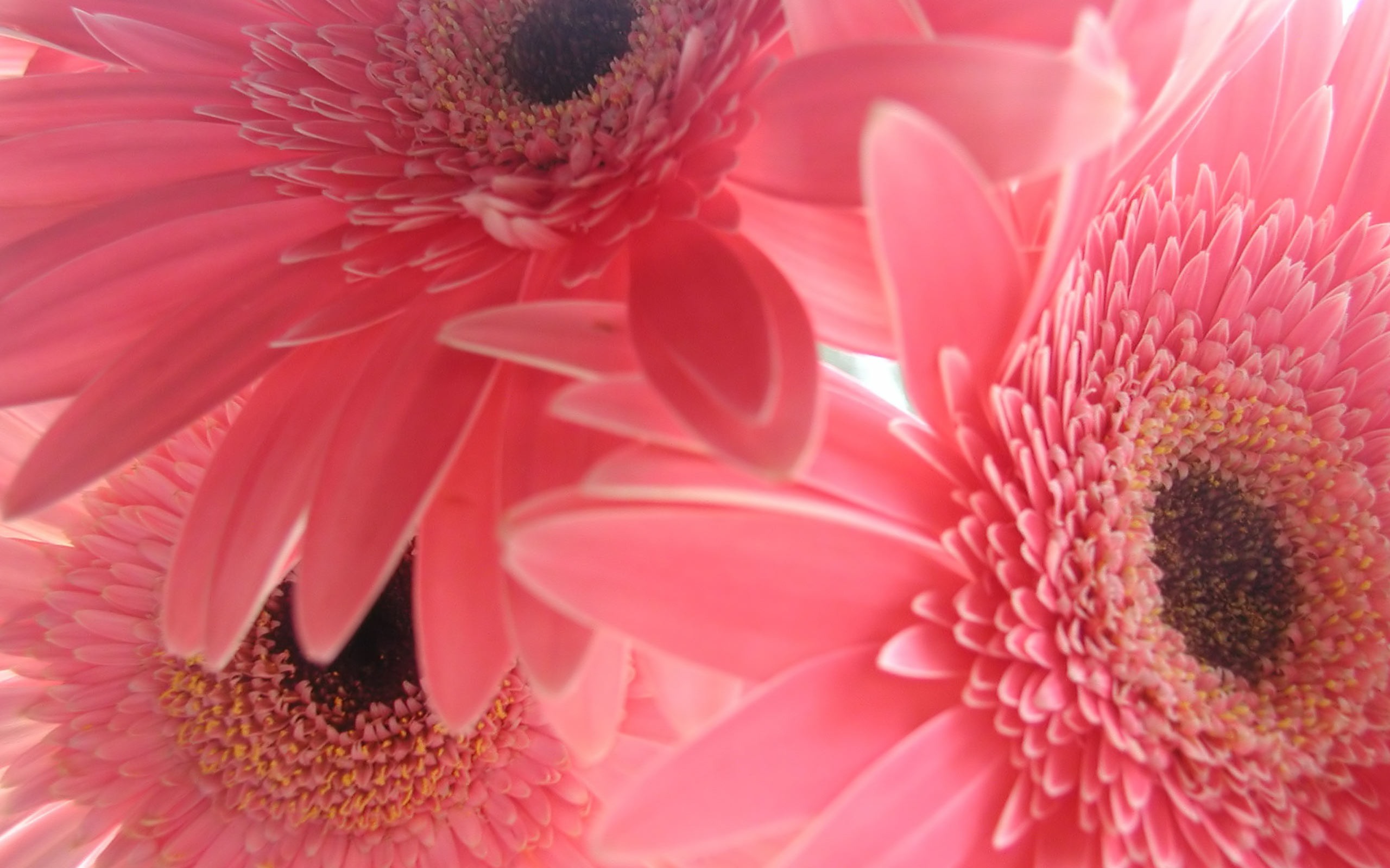 Pink Flower Backgrounds   wallpaper, wallpaper hd, background desktop