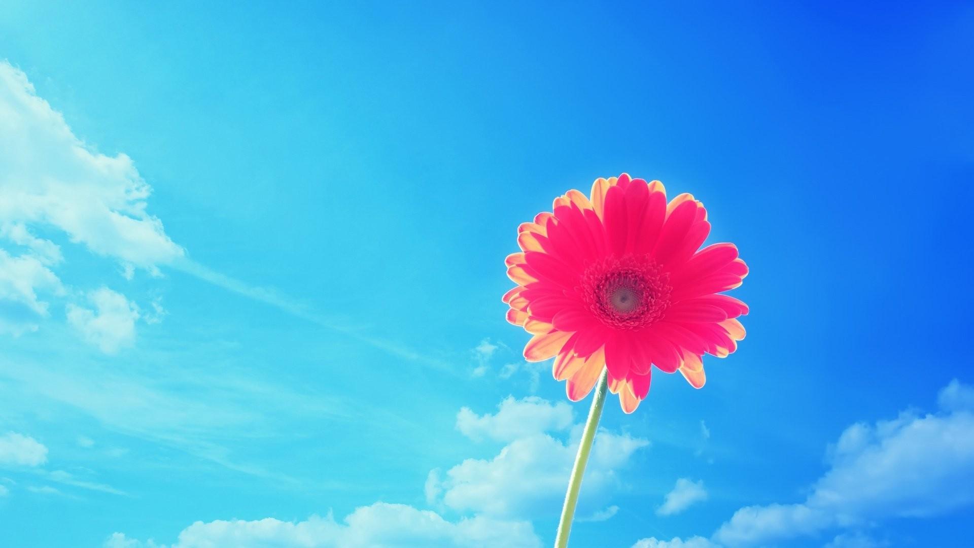 Pink Summer Desktop Wallpaper Simple Decoration Flower Motive Ideas  Personalized Sample Themes