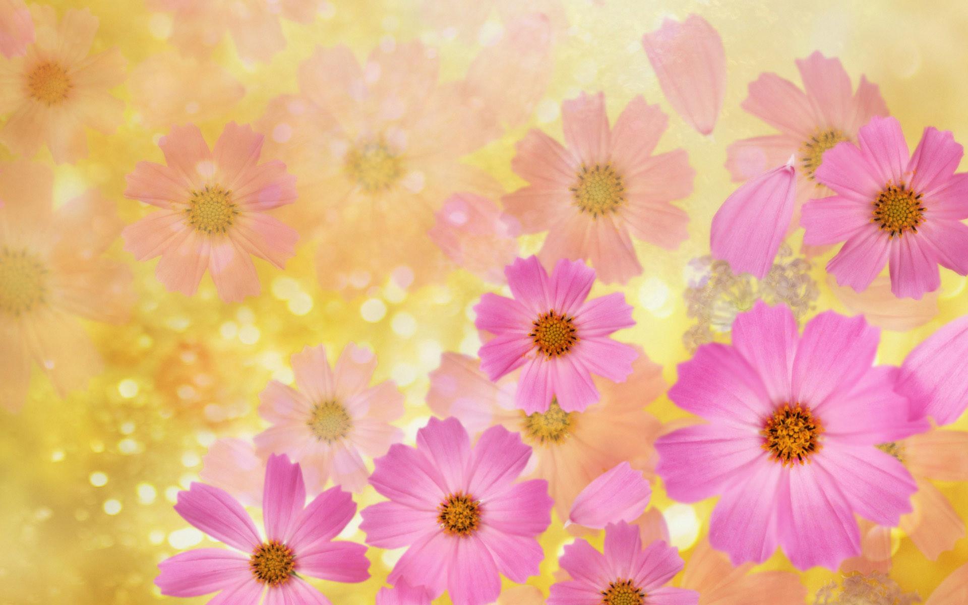 Widescreen HD Wallpaper > Themes > Beautiful spring flowers   High .