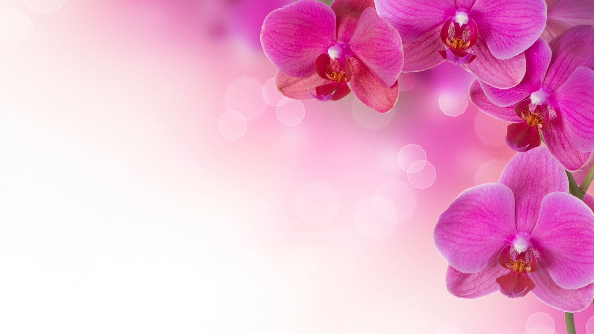 desktop hd floral wallpaper pink