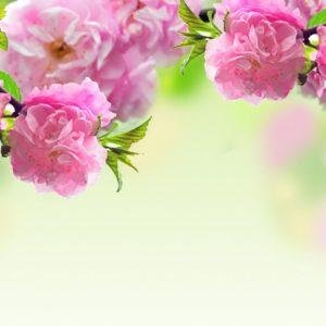 Pink Desktop Wallpaper themes